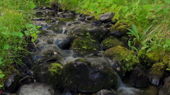 Maledny spring, among the vegetation Stock Footage