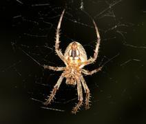 spider. super macro - stock photo