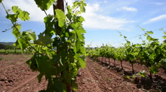 VINEYARD, VAR, SOUTH OF FRANCE Stock Footage