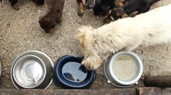 Empty plate for food homeless dogs Stock Footage