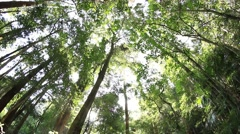 Temperate Rainforest Canopy Australia Stock Footage