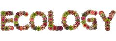 ecology uppercase letters from bromeliad flower alphabet isolated on white ba - stock photo