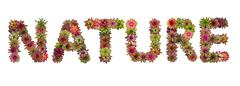 nature uppercase letters from bromeliad flower alphabet isolated on white bac - stock photo