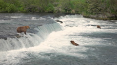 Three Bears At Brooks River Alaska Stock Footage
