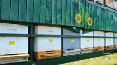 beekeepers hives in the apiary visit and comment ,sunlight on beehives - stock footage