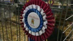 2275 Blue Ribbon Best of Show at Fair, 4K Stock Footage