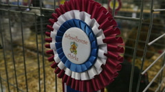 2275 Blue Ribbon Best of Show at Fair, HD Stock Footage
