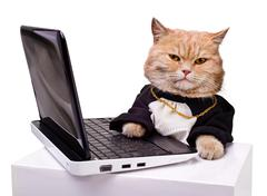 Intelligent cat for the laptop Stock Photos