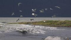 Flying Gulls and Crashing Debris Waves in High Windstorm HD Stock Footage
