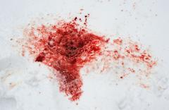Red blood on white snow.wound. Stock Photos
