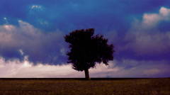 Iconic landscape silhouetted tree on meadow,storm clouds background timelapse Stock Footage