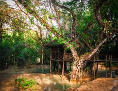Wooden arbour at tropical rain forest at outdoors park. laos Stock Photos