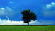 Stock Video Footage of Iconic landscape silhouetted tree on meadow,storm clouds background timelapse