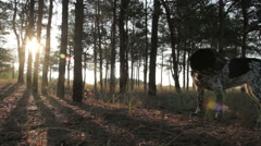 Spoted dog in forest Stock Footage