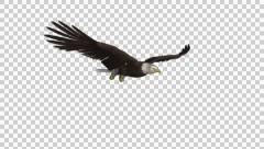Bald Eagle - Gliding Loop - 4 - Alpha Channel - stock footage