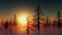 Dead forest in water and the glowing sun Stock Footage