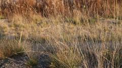Dry quiet grass in autumn Stock Footage