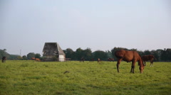 Horses in Normandy, France Stock Footage