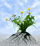 Power of Persistence - stock photo