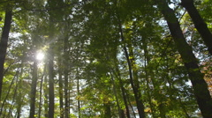 Pan of Sun Rays in Forest Stock Footage