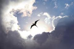 Fly to heaven Stock Photos