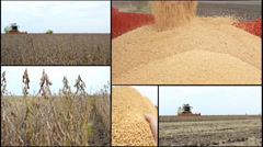 Combine harvest Soybean multi screen collage in field soya  Stock Footage