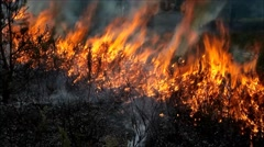 Forest fire closeup - stock footage