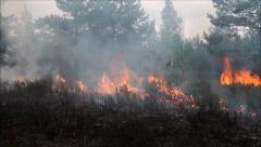 Forest fire Stock Footage