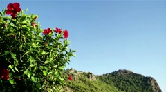 Hibiscus in Alanya Turkey with the Castle in the Background 1 - stock footage