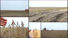 Soybean combine harvest in field soya beans multi screen collage Stock Footage