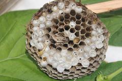 Bee hive (arı kovanı organik) Stock Photos