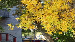 Close-up yellow leaf of tree in school yard, autumn. Waving on wind - stock footage