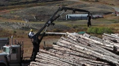 Logging crane loading cut trees Stock Footage