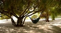 Woman Lying in a Hammock in Tree Shadow on a Beach. HD Footage