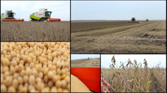 multi screen collage combine harvest in field soya  Stock Footage
