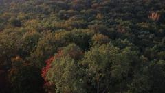 Top shot from the forest in the autumn Stock Footage