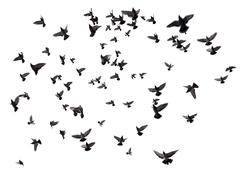 Many birds flying in the sky Stock Photos