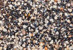 seashells background - stock photo
