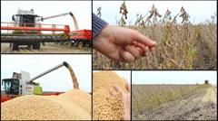Soybean multi screen collage combine harvest in field soya  Stock Footage