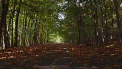 Autumn forest avenue Stock Footage