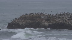 Birds on Island at Pescadero Beach Stock Footage