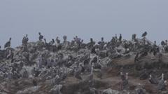 Rocky Island full of Birds off Pescadero Beach Stock Footage