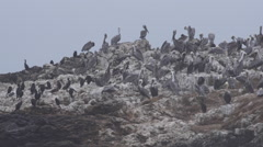 Pan shot of Rocky Island full of Birds off Pescadero Beach at 60fps Stock Footage