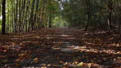 Light alternately in the autumn forest avenue Stock Footage