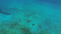Turtle Surfaces with snorkeler and dives away Stock Footage