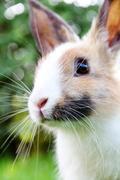 cute bunny rabbit  on the grass - stock photo
