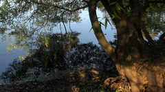 Trees near a quiet lake. Stock Footage
