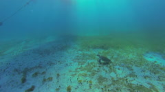Turtle at the bottom of the ocean Stock Footage