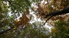 Bottom shot of autumn forest on sunny day Stock Footage