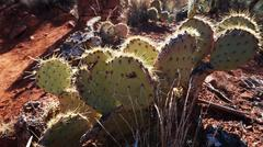 cactus in the canyon in arizona - stock photo